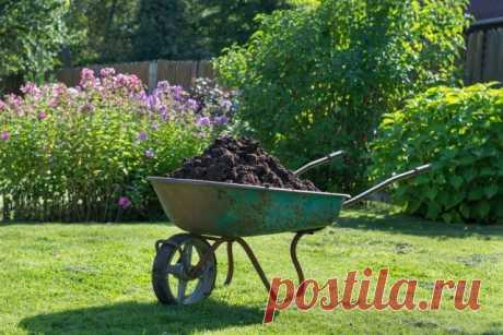 Que abonos aportar en primavera: que sobrealimentar el jardín, la huerta, el césped y el macizo de flores