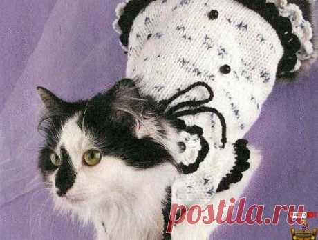 Como vincular la ropa para las gatas - el vestido Blanco a la florecita - Puramente el GATO