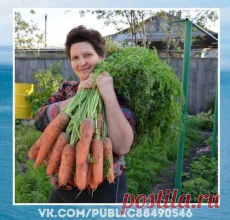 Необычно.  Я морковь сeю cледующим обрaзом.