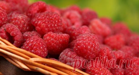 Чем подкормить малину в июне-июле | 6 соток
