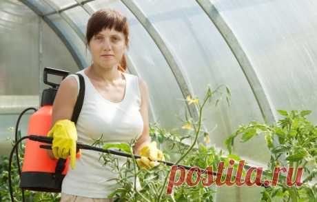Обработка томатов борной кислотой: как опрыскать удобрениями помидоры, подкормка растений, как поливать