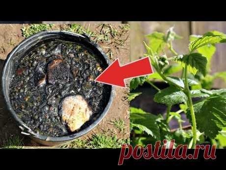 Малины будет хоть продавай! Подкормите этим малину во время цветения и плодоношения!
