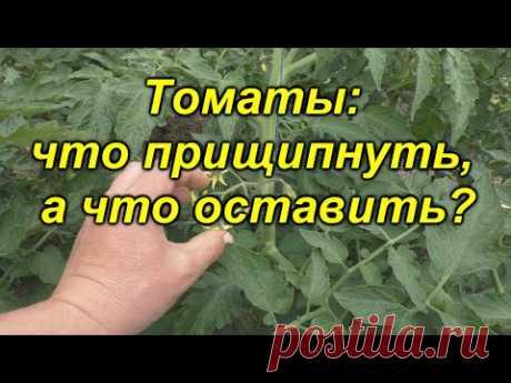 Формировка томатов - что прищипнуть, а что оставить? Как повысить урожай в ДВА раза?
