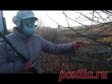 Опрыскивание сада в марте мочевиной с медным купоросом