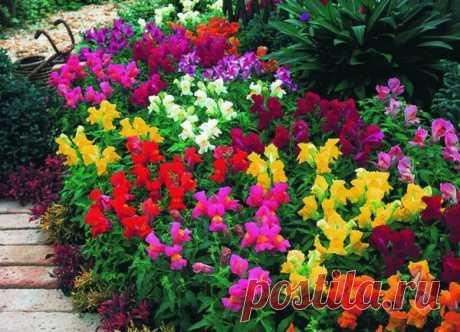 4 простых цветника, которые украсят вашу дачу | Дача Удачи | Яндекс Дзен