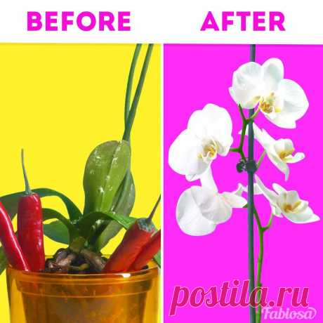 5 brilliant orchid care tips for beginners | How to care for an orchid | Planting tips