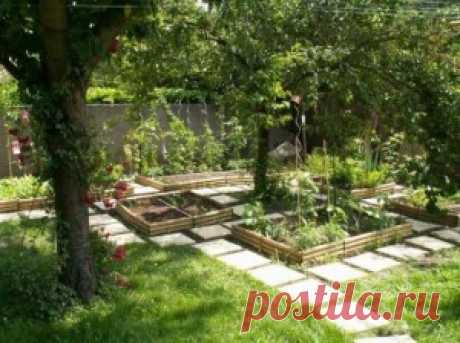 Что посадить в тени на даче   Сад 365