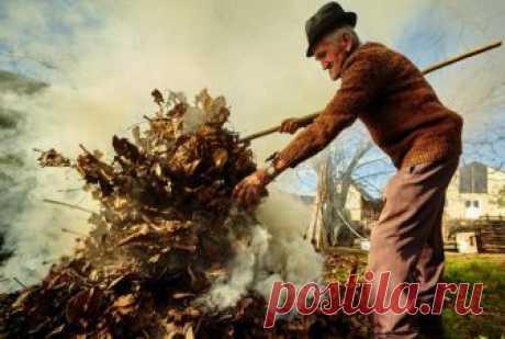 Что грозит Вашему соседу за сжигание мусора на участке? | Законодатель 💼 | Яндекс Дзен