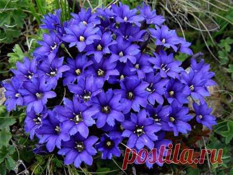 Цветы для дачи Активный отдых на даче приносит настоящее удовольствие и каждому найдется занятие по душе.А одним из самых медитативных и творческих является садоводство. Помимо этого, цветы для дачи смогут стать от…