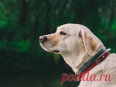Во время трагедии 11 сентября 2001 года многие проявили героизм и мужество, помогая людям выбраться из рушащихся зданий. К таким героям относятся и собаки – Дорадо, Розелла и Джейк.