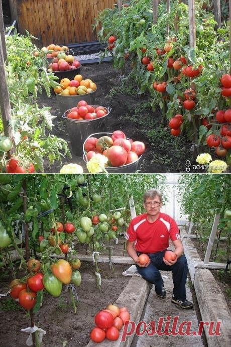 хитрости для томатов