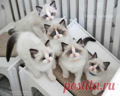 Три кота и много других веселых котят!