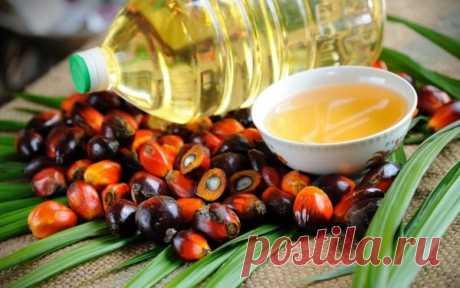 Мифы и правда про пальмовое масло Насколько справедливы опасения, связанные с этим продуктом? Универсальное масло Сегодня 80% производства приходится на Индонезию и Малайзию. Масло получают из плодов масличной пальмы (пальмовое) и из их косточки (пальмоядровое). Родиной пальмового масла считается Африка. Согласно данным археологических раскопок, его использовали в Египте еще 5 000 лет назад. По... Читай дальше на сайте. Жми подробнее ➡