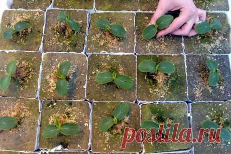 Когда сажать рассаду цветов и овощей? Узнайте, какую рассаду сажают в феврале! | LS