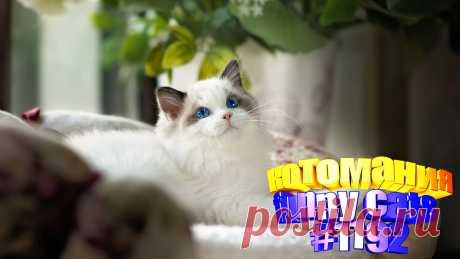 Любите смотреть смешные видео про кошек? Тогда мы уверены, Вам понравится наше видео 😍. Также на котомании Вас ждут: видео кот,видео кота,видео коте,видео котов,видео кошек,видео кошка,видео кошки,видео о котах, видео о кошках, видео смешное о кошках, для котов видео, котики смешное, кошка видео смешное, о кошках, приколы про, про котиков, с кошками, смешное про котов, смешное про кошек, смешные кошки видео до слез