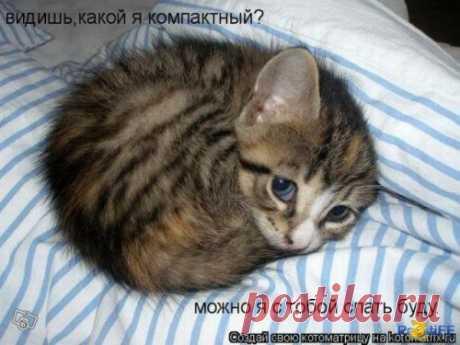 смешные фото животных - Страница 456 - Форум о собаках Doggi.ru