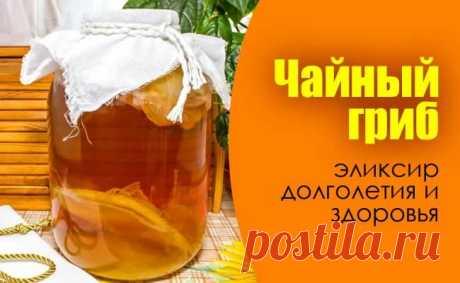 Ваш целитель в банке - Чайный гриб от 100 болезней