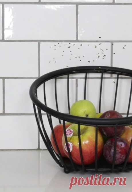 Se libren de los puntos de mira de frutas por el modo elemental