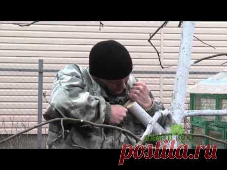 Обрезка и прививка яблони - YouTube