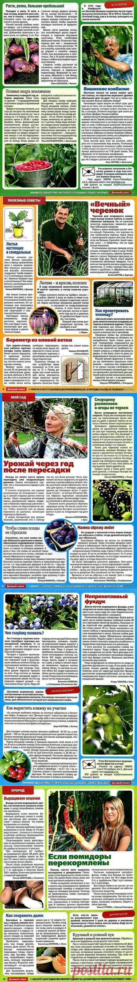 Дачный совет - 2013/8.