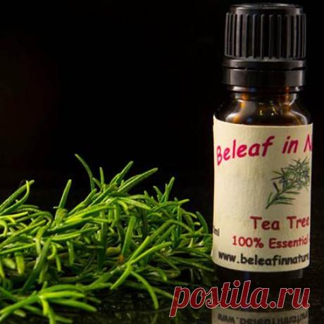 Необычное применение эфирного масла чайного дерева Эфирное масло чайного дерева — мощное антибактериальное средство, поэтому оно незаменимо в быту. Предлагаем 15 необычных способов его применения, которые помогут решить массу проблем.