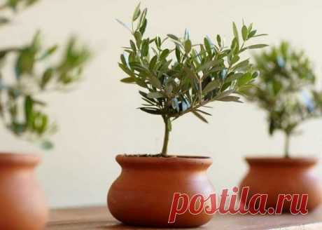 Популярная экзотика среди комнатных растений / Домоседы