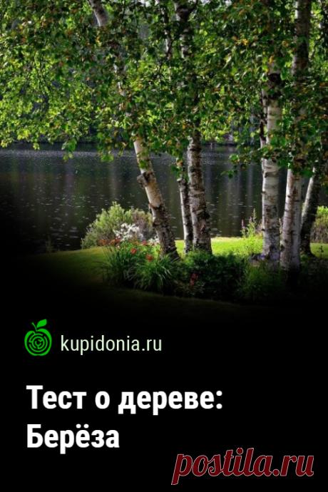 Тест о дереве: Берёза. Интересный тест о берёзе из серии тестов о деревьях. Проверьте свои знания!