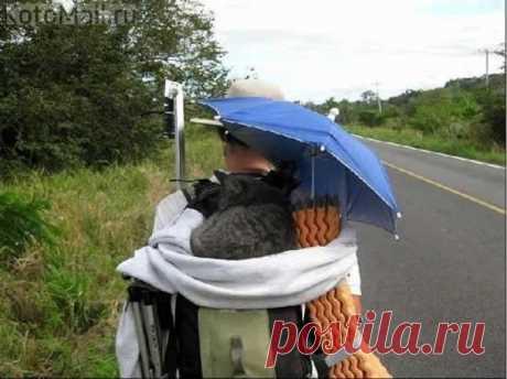 Верный кот-путешественник