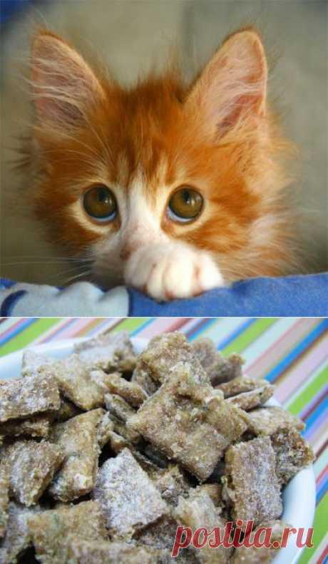 Корм для кошек и собак собственного приготовления | ДОМАШНИЙ ОЧАГ