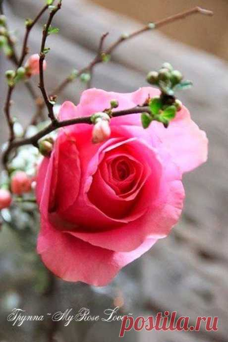 Я собираю запахи Весны, Я наслаждаюсь эрой послезимья, Уходит мир холодного унынья, И возвращаются ко мне цветные сны..
