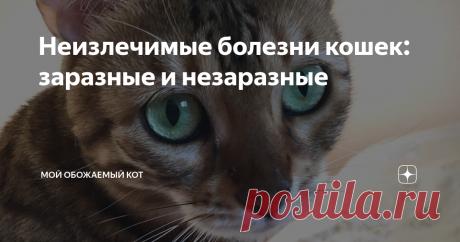 Неизлечимые болезни кошек: заразные и незаразные