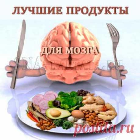 Лучшие продукты для мозга стимулируют его функции, повышают умственные способности и психическую устойчивость, предупреждают слабоумие