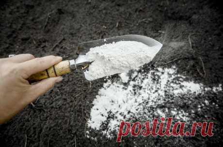 Доломитовая мука: как правильно использовать в саду и огороде