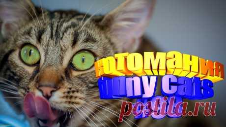 Вам нравится смотреть приколы про котов? Тогда мы уверены, Вам понравится наше видео 😍. Также на котомании Вас ждут: видео кот,видео кота,видео коте,видео котов,видео кошек,видео кошка,видео кошки,видео о котах, видео о кошках смешные, видео смешные, говорящие коты видео, котов, кошек смешные, кошку, приколы про, прикольные коты, про кошку, смешно про кошек, смешные животные бесплатно, смешные коты