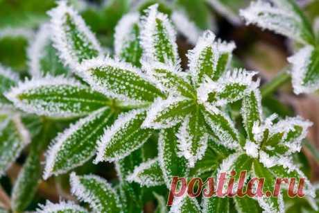 Как защитить растения от возвратных заморозков / 7dach.ru