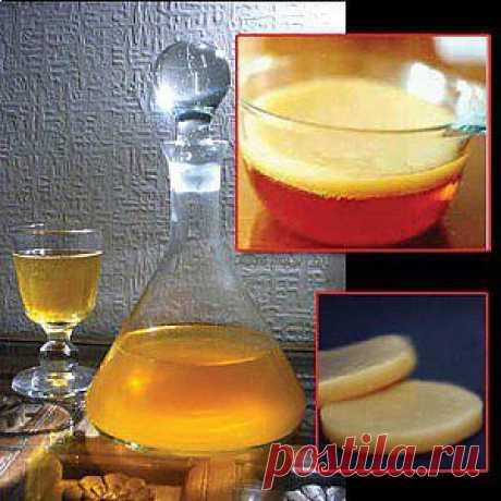 Полезные свойства чайного гриба.   Гармония