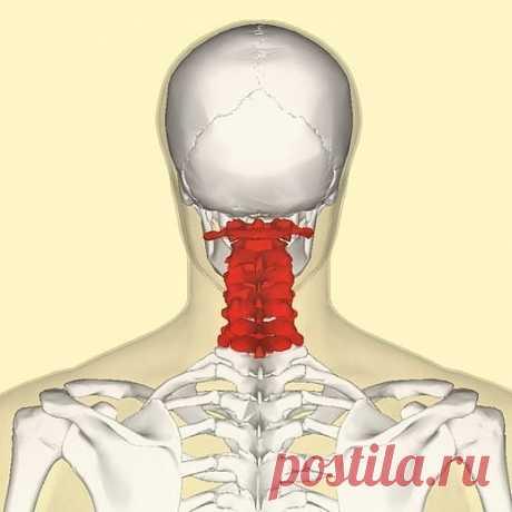 ¡La gimnasia para el cuello — cuatro pasos a la flexibilidad y la belleza! \u000d\u000a\u000d\u000aLa gimnasia para el cuello crea los milagros. \u000d\u000aSolamente cuatro ejercicios, que parecen trivial a primera vista, a la ejecución regular ayudarán apretar la piel del cuello, normalizar el sueño y hasta librarse de los dolores en sheynom el departamento de la columna vertebral. \u000d\u000a\u000d\u000aLa gimnasia para el cuello ayudará quitar la tensión y en el futuro le librará de los gastos por los lifting-procedimientos caros. No olviden, de aquel, en que estado se encuentran los músculos del cuello y de pecho...