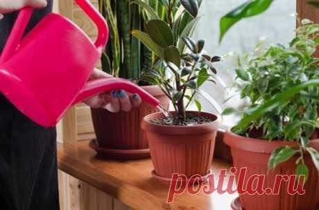 3 простых способа сделать воду для полива цветов МЯГКОЙ (такой, какая должна быть) | Секреты Сада. Дача, цветы | Яндекс Дзен