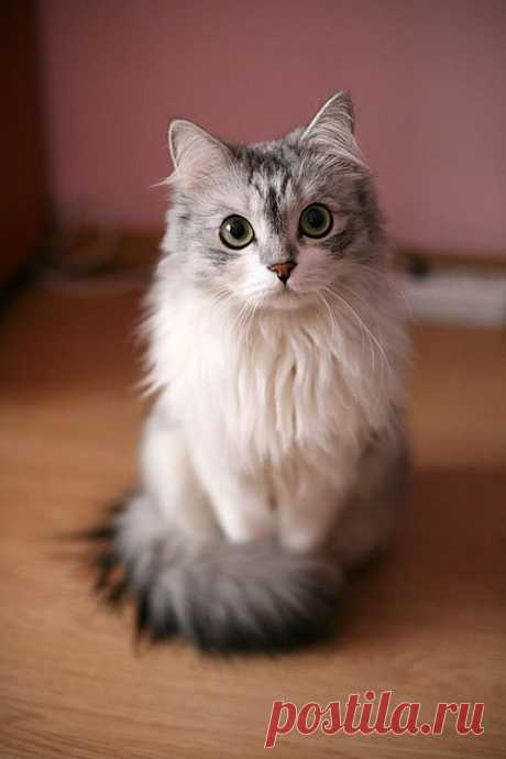 Ridiculously Photogenic Cat - Imgur