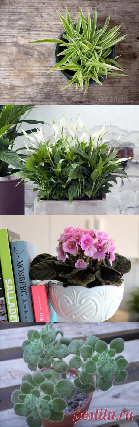 Топ-10 растений, которые приносят в дом семейное счастье