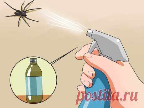 Избавление раз и навсегда от пауков, тараканов и других насекомых в доме Данный метод просто спасение. Вы удивитесь, насколько легко и безвредно для Вас и вашего здоровья можно избавиться от насекомых, в том числе и от пауков.