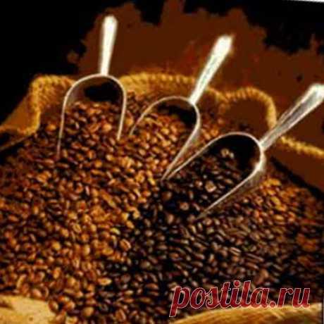 Сорта кофе. Краткий путеводитель в увлекательном мире. Сорта кофе часто путают с видами кофе. Тогда как видов кофе немного, основные из них арабика и робуста, кофейных сортов насчитывается несколько тысяч.