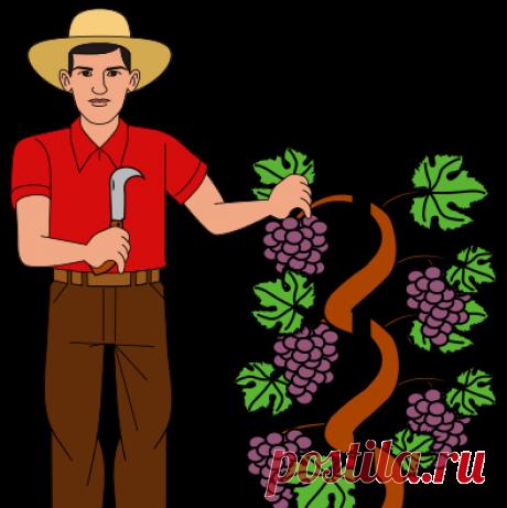 Gardener Krrot
