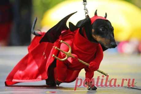 Las fotografías animal   el Diablo toma