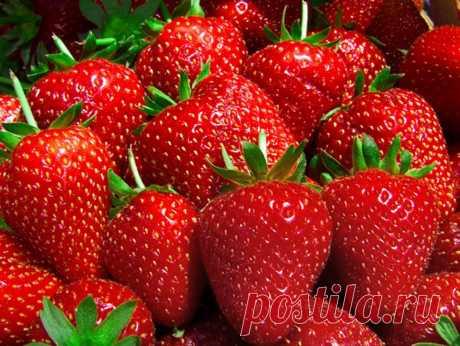 El calendario del cuidado de la fresa desde la primavera hasta otoño.
