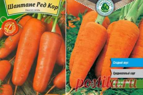 Морковь Ред кор: описание сорта, фото, отзывы, характеристика, достоинства и недостатки, особенности выращивания, урожайность