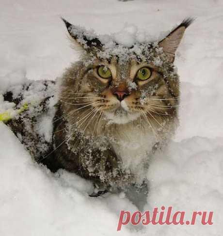 Фотография Мой ласковый и нежный зверь)))