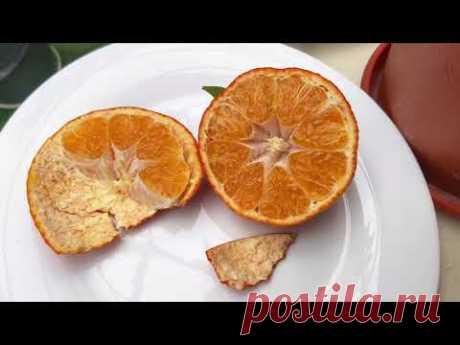 "C. clementina ""Orogros"" - YouTube"