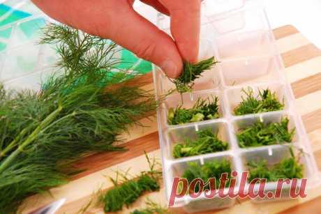 Необычный способ заготовки зелени на зиму   Огород на подоконнике   Яндекс Дзен