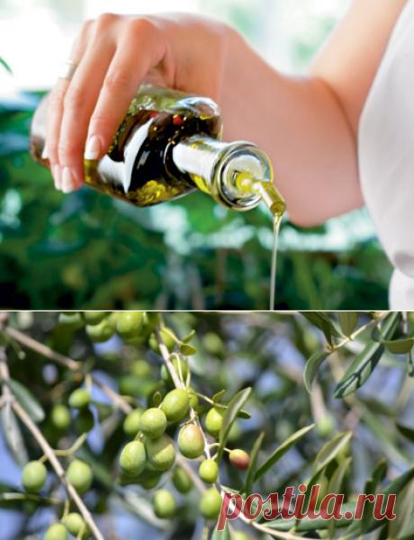 Оливковое масло в кулинарии, медицине, косметике - Образованная Сова